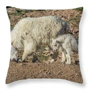 Mountain Goat Kid Stretches By Mom Throw Pillow