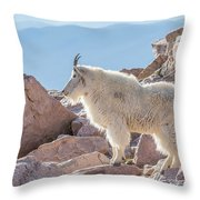 Mountain Goat Takes In Its High Altitude Home Throw Pillow