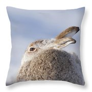 Mountain Hare - Scottish Highlands  #10 Throw Pillow