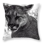 Mountain Lion Bw Throw Pillow