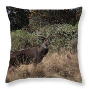 Mountain Nyala Throw Pillow