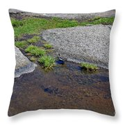 Mountain Sanderling Throw Pillow