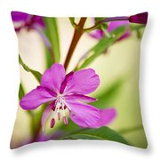Mountain Wildflower In Summer Throw Pillow