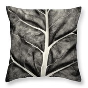 Mounts Botanical Garden 2374 Throw Pillow