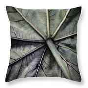 Mounts Botanical Gardens 2360 Throw Pillow