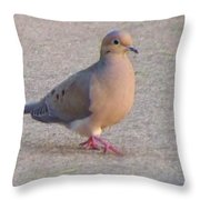 Mourning Dove     Zenaida Macrowra   Spring   Indiana Throw Pillow