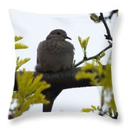 Mourning Dove 2 Throw Pillow