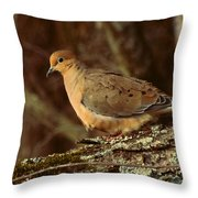 Mourning Dove At Dusk Throw Pillow