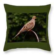 Good Morning Mourning Dove  Throw Pillow