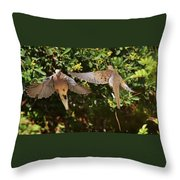 Mourning Doves Wings  Throw Pillow