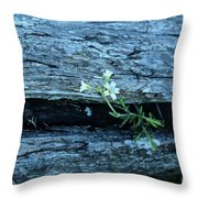 Mouse Eared Chickweed Throw Pillow