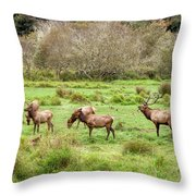 Move Along Now Throw Pillow