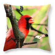 Mr Cardinal Throw Pillow