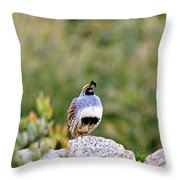 Mr. Gambel Throw Pillow
