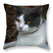 Mr. Kitty   Throw Pillow