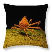 Mr. Krabbs Throw Pillow