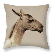 mr Llama Throw Pillow