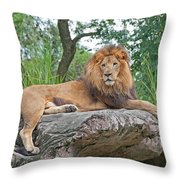 Mr Majestic Throw Pillow