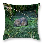 Mr. Muscrat Throw Pillow