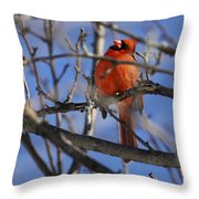 Mr. Red Beauty Throw Pillow