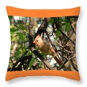 Mrs Cardinal Throw Pillow