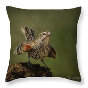 Mrs. Red Winged Blackbird Throw Pillow