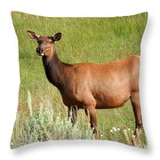 Ms. Elk Throw Pillow