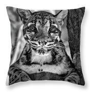 Ms Paws Monochrome Throw Pillow