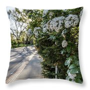 Msu Spring 43 Throw Pillow
