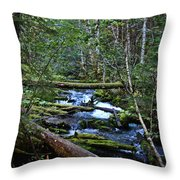 Mt Hood Wilds Throw Pillow
