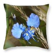 Mt. Lemmon Flower Throw Pillow