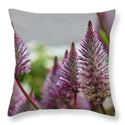 Mt. Washington Flowers Throw Pillow