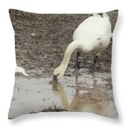 Muddy Tundra Swan Throw Pillow