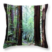 Muir Woods 1 Throw Pillow
