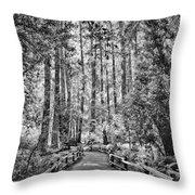 Muir Woods Bw Throw Pillow