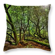 Muir Woods Rejuvenation Throw Pillow