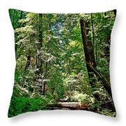 Muir Woods Study 22 Throw Pillow