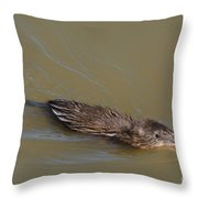 Muskrat Swimming In Lake With Mouth Open Underwater Throw Pillow