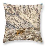 Mule Deer Buck In Winter Sun Throw Pillow
