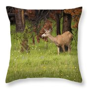 Mule Deer Throw Pillow
