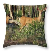 Mule Deer Doe And Fawn Throw Pillow