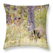 Mule Deer Doe In The Pike National Forest Throw Pillow
