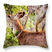 Mule Deer Foraging On Pine On A Colorado Spring Afternoon Throw Pillow