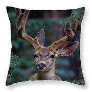 Mule Deer In Velvet 02 Throw Pillow
