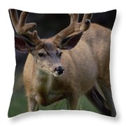 Mule Deer In Velvet 03 Throw Pillow