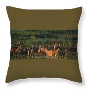 Mule Deer In Velvet 04 Throw Pillow