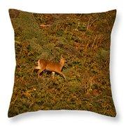 Mule Deer - Mattole Beach Throw Pillow