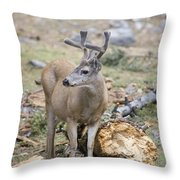 Mule Deer Odocoileus Hemionus Buck Throw Pillow
