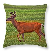 Mule Deer On The Sante Fe Trail Throw Pillow