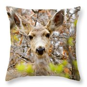 Mule Deer Portrait In The Pike National Forest Throw Pillow